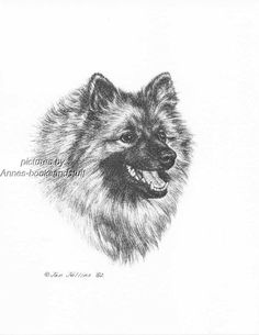 #313 KEESHOND portrait * dog  art print * Pen and ink drawing * Jan Jellins
