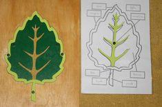 Botanica Montessori: incastro della foglia – Lapappadolce Montessori, Language Arts, Coasters, Rugs, Decor, Farmhouse Rugs, Decoration, Coaster, Language