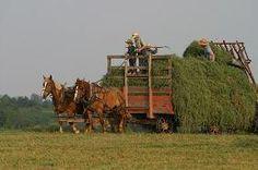 amish peopl, amish harvest, amish life, simpl life