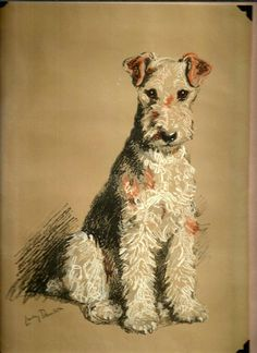 WFT.. Attentiveness of Wire Hair Fox Terrier ♥..♥