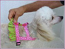 Easy-On Harness for Small Dogs - Comfortable, Durable Fashion – UdogU