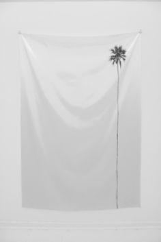 single palm  A metaphor for my love life.