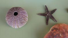 Coñecendo animais mariños