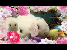 ❤Happy Easter, Everyone❤ - YouTube