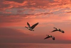 Geese over the pacific by Eli Mordechai