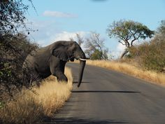 Krugerpark - Zuid Afrika