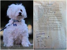 Responsabilidade: para adotar cão pai cria contrato com filhas