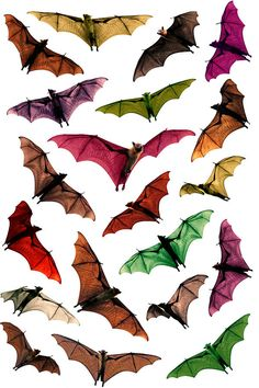 These bats are gorgeous. We love bats at www.twisteddreams.co.uk.