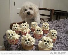 Pupcakes.. makes me laugh