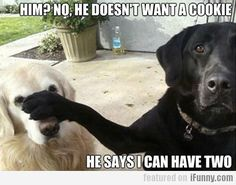 #Funny #Dog Pictures | Baking Beauty