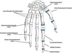 vertebral landmarks