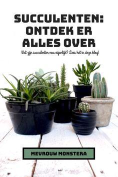 In deze blog lees je alles wat je wilt weten over succulenten. #succulenten #vetplanten #kamerplanten #plants #plantblog #plantinfo #urbanjungle Echeveria, Plants, Blog, Everything, Blogging, Plant, Planets