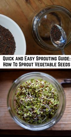Quick and Easy Sprouting Guide: How To Sprout Vegetable Seeds Broccoli Sprouts, Growing Sprouts, Growing Herbs, Sprouts Vegetable, Small Space Gardening, Indoor Gardening, Sprouting Seeds, Micro Nutrients