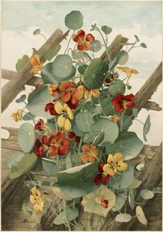The Nasturtiums, No. 2, Thaddeus Welch, 1861-1897, from the Boston Public…