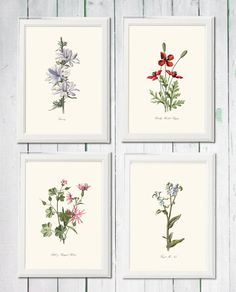 Wild flowers blue purple pink red vintage 4 printables png and jpg poppy robin forget me not succory  digital file INSTANT DOWNLOAD