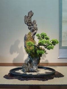 1000 images about ishizuki sur rocher on pinterest for Unusual bonsai creations