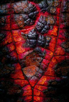 Autumn Embers: Photo by Photographer Antony Long