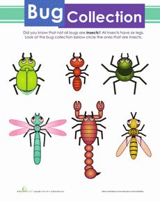 Create Your Own Insect Worksheet | Legs, Animal activities ...