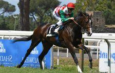 Full Drago  Cavallo da corsa di razza purosangue inglese, campione in Italia, nato il 5 aprile 2013. Generato da Pounced e Almata. Di proprietà di F.