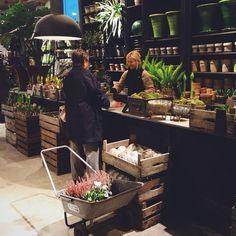 Zetas trädgård i Victoria Skoglund - SE Official Flower Cafe, Flower Shops, Flower Shop Interiors, Flower Shop Design, Shop Counter, Flower Studio, Garden Shop, Store Displays, Cafe Restaurant