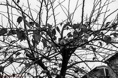 L'inverno è una primavera che si ignora. Henry de Montherlant, Malatesta, 1946