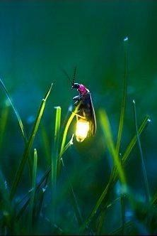 Who can remember how much fun it was to catch lightning bugs on hot summer nights? #SummertimeMagic
