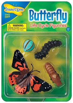 Egg, Caterpillar, Chrysalis and Adult Butterfly replicas are oversized for little hands. Made of durable, flexible plastic, these figures encourage up-close examination of the Miracle of Metamorphosis. Life Cycle Stages, Bug Toys, Butterfly Life Cycle, Outdoor Learning, Soft Plastic, Woman Painting, Life Cycles, Science Nature, Insects