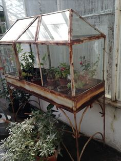 Now i definitely need a Wardian case for some of my plants Backyard Greenhouse, Greenhouse Growing, Small Greenhouse, Greenhouse Wedding, Greenhouse Plans, Homemade Greenhouse, Portable Greenhouse, Indoor Garden, Outdoor Gardens