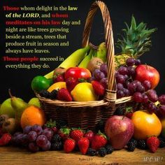 A guided meditation on the Fruit of the Spirit from Galatians Free Guided Meditation, Fruit Of The Spirit, Fruit In Season, Growing Tree, Fresh Fruit, Royalty Free Images, Cherry, Stock Photos, Apple