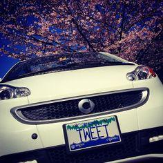 """#Beautiful #smartcar and #cherry #blossoms"" - Instagram picture by @Geoffrey_Bird #sakura #canada #vancouver #spring #sky #blue #smartonthego #joy #smartlife"