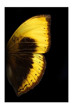 Butterfly wing. Photographer Unknown.