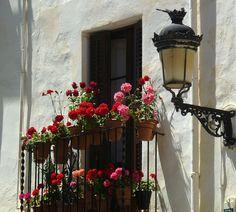 Spanish Geranium pots