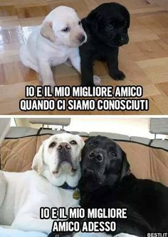 Io e il mio migliore amico Funny Animal Photos, Funny Images, Funny Pictures, Animals And Pets, Baby Animals, Cute Animals, Funny Dog Memes, Funny Dogs, Beagle