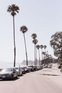 Palm Trees, Santa Barbara, California @coveteur