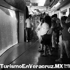 Espera el acuario de #Veracruz más de 100 mil visitantes http://www.turismoenveracruz.mx/2012/08/espera-mas-de-100-mil-visitantes-el-acuario-de-veracruz/