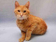 KHABA A1086163 Young ginger boy TBD 8/26/16