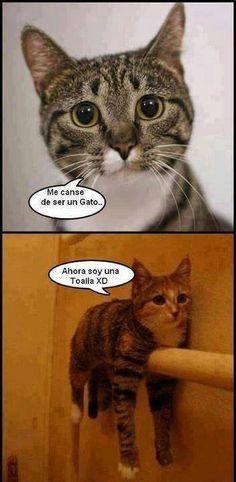 Me cansé de ser un gato, ahora soy una toalla