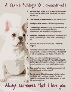 :'(  #for-the-love-of-frenchies