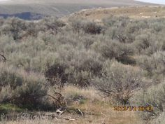 PT MARCH 2015 KUNA IDAHO, BIRDS OF PREY. DESERT AREA. THIS IS WHAT A LOT OF IDAHO LOOKS LIKE.