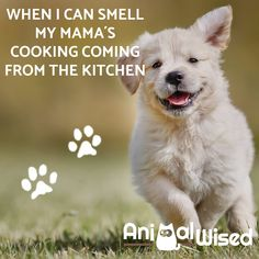 PIN IF YOU AGREE- Want to find out everything you need to know about your adoring pets and animals, take a look at AnimalWised to find out more !!!  #animals #petcare #AnimalWised #dogs #pettips #cats #cute