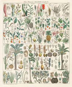 Oken Antique Prints, shell prints, fish prints, coral prints, jellyfish prints 1833-1841