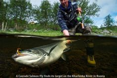 Salmon Flies explained #salmonfishing #fishing #fishingflies http://www.ardmoor.co.uk/blog/2015/january/salmon-flies-explained