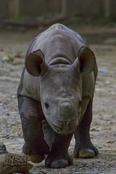 Baby Rhino by Keny Busch on 500px