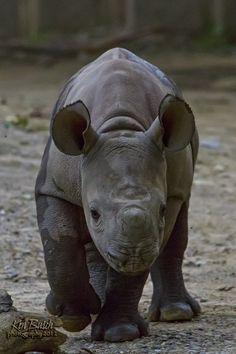 Baby Rhino by Keny Busch on 500px