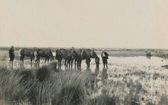 Ontginning...Someren Heide 1930...7
