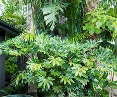 A tropical garden in the heart of Melbourne - tropical garden ideas Tropical Garden Design, Tropical Backyard, Tropical Landscaping, Landscaping With Rocks, Tropical Plants, Tropical Flowers, Backyard Landscaping, Tropical Gardens, Small Flowers