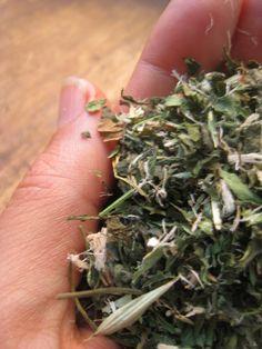 Herbal vitamin infusion