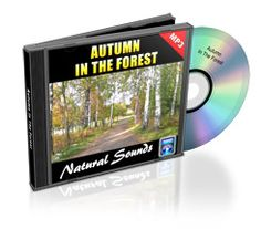Free Download of Nature Sounds - Autumn At The Forest