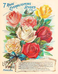 Antique Vintage Gül Posterleri_2_(20 Adet) | Dekupaj Desenleri
