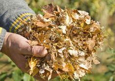 Comment bien utiliser les feuilles mortes au jardin